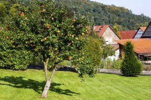 Obstbäume: Wachstum & Erhalt